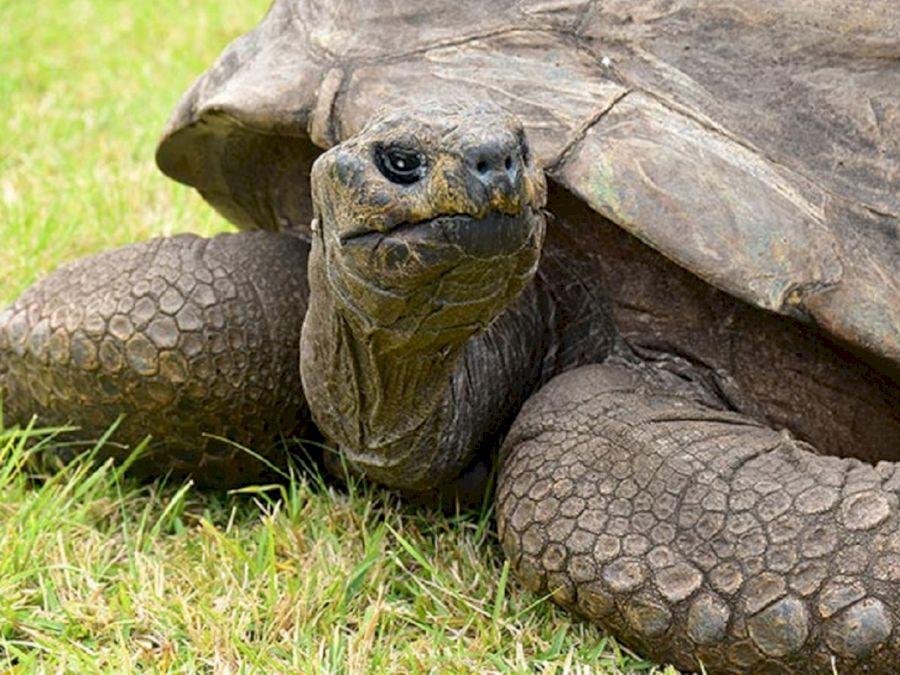 ce a făcut țestoasa pentru a slăbi