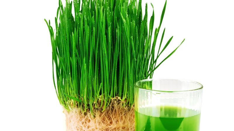 Cum sa slabesti cu ajutorul superalimentului Amazing Grass, Iarba de Grau | Claudia Nicolae