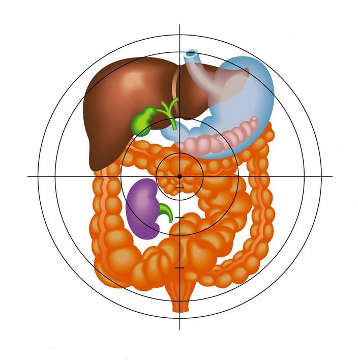 pierderea de grăsime a microbilor intestinale