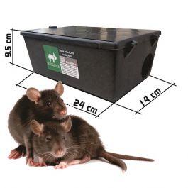 Șobolan brun - Brown rat - sudstil.ro