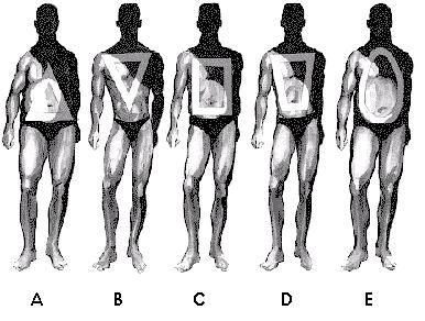 Glosar de anatomie