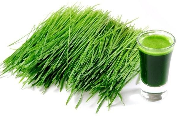 iarbă de orz pentru pierderea în greutate