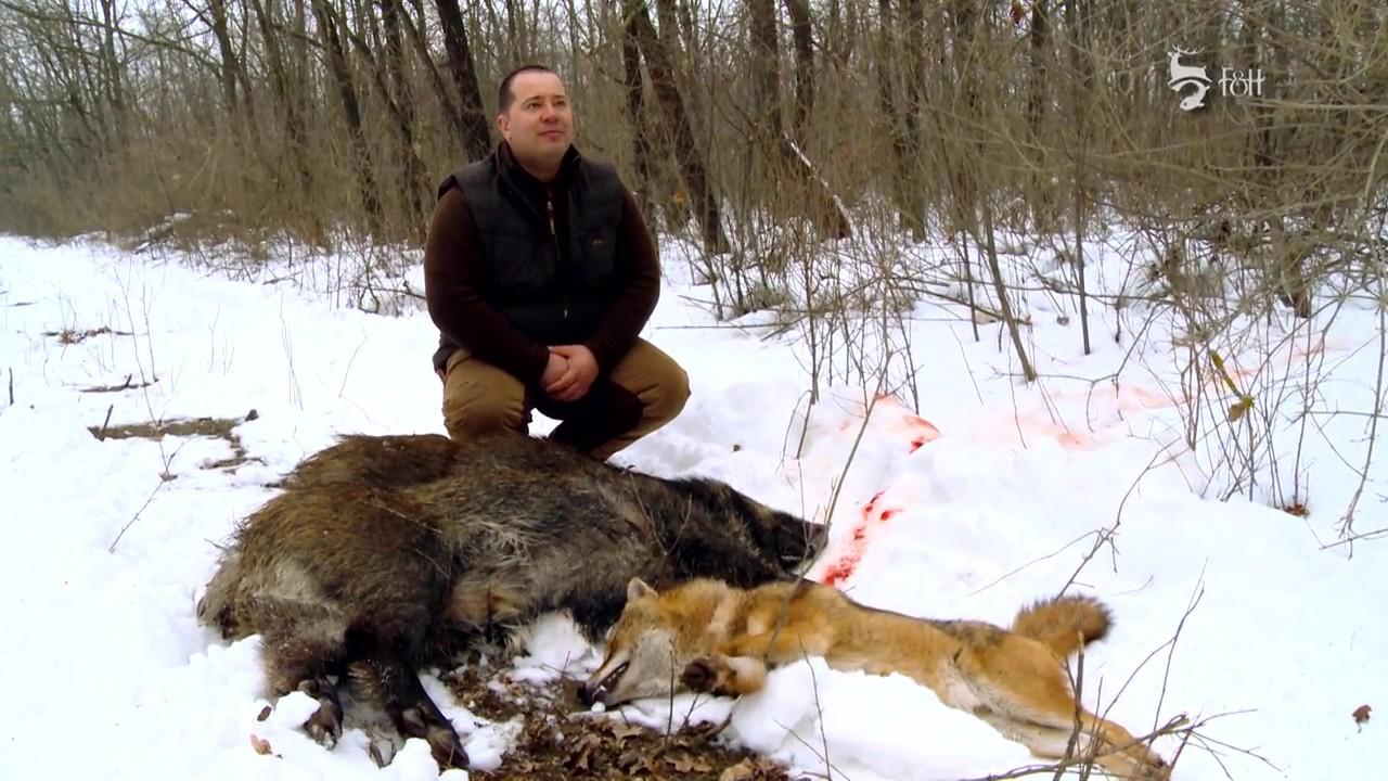 ton de la vânătorii de licitații pierdere în greutate arzător de grăsimi diavol negru