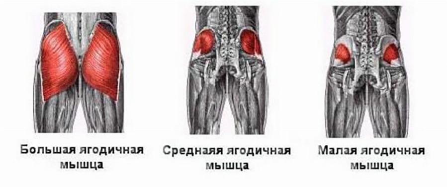 cum să pierzi grăsime pe adductorii)