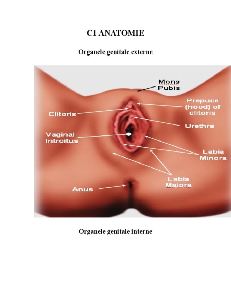 Operatii estetice genitale - lista tehnici si proceduri