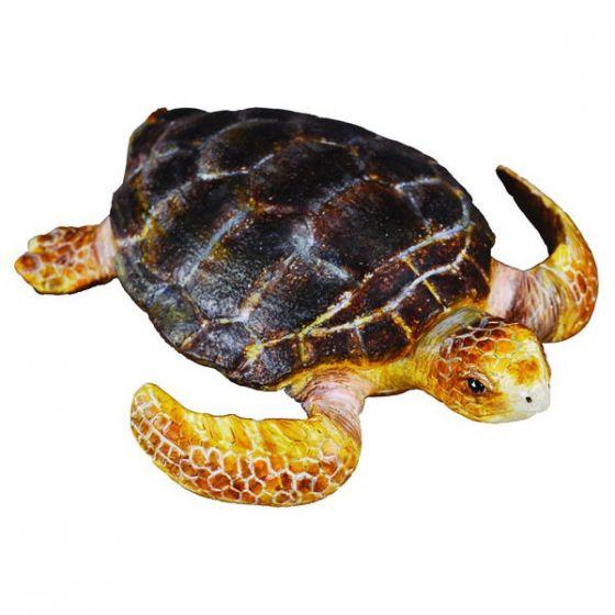 ce a făcut țestoasa pentru a slăbi)