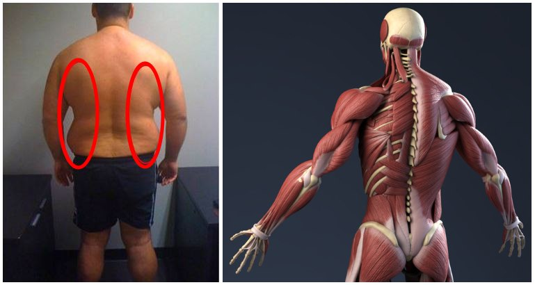 creșterea în greutate musculară față de grăsime