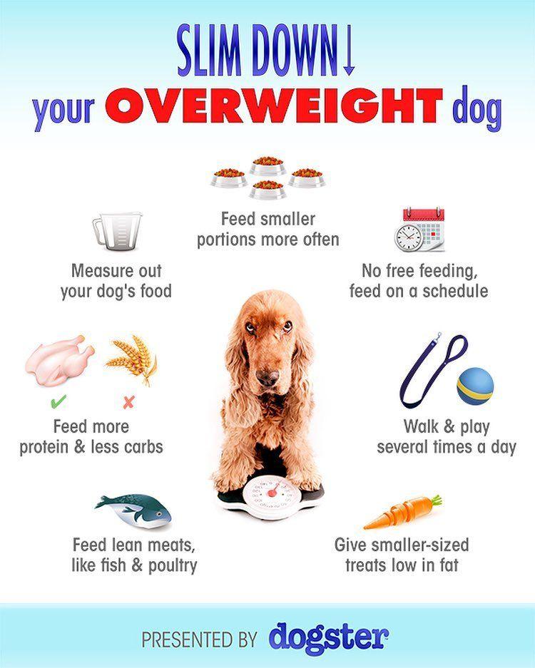 pierdere în greutate moviprep sfaturi de acasă în pierderea în greutate