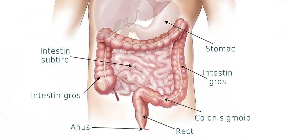bowel movements - Traducere în română - exemple în engleză   Reverso Context