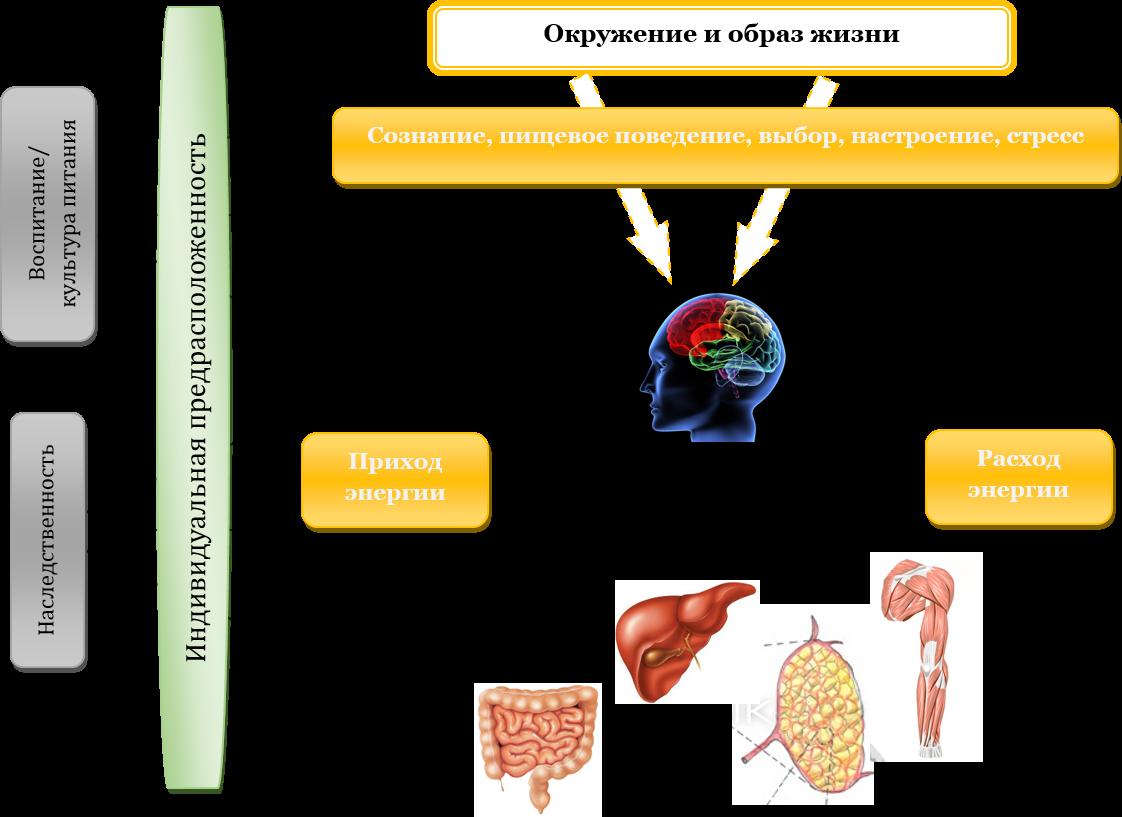 Cum să evitați redobândirea greutății după pierderea semnificativă în greutate | sudstil.ro