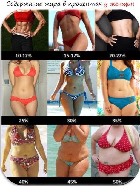 estimator al pierderilor de grăsime corporală)