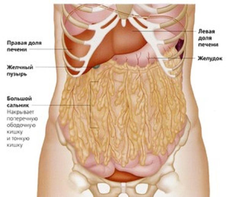 cum să arzi grăsimea organelor interne greutate sănătoasă de pierdut în 6 luni