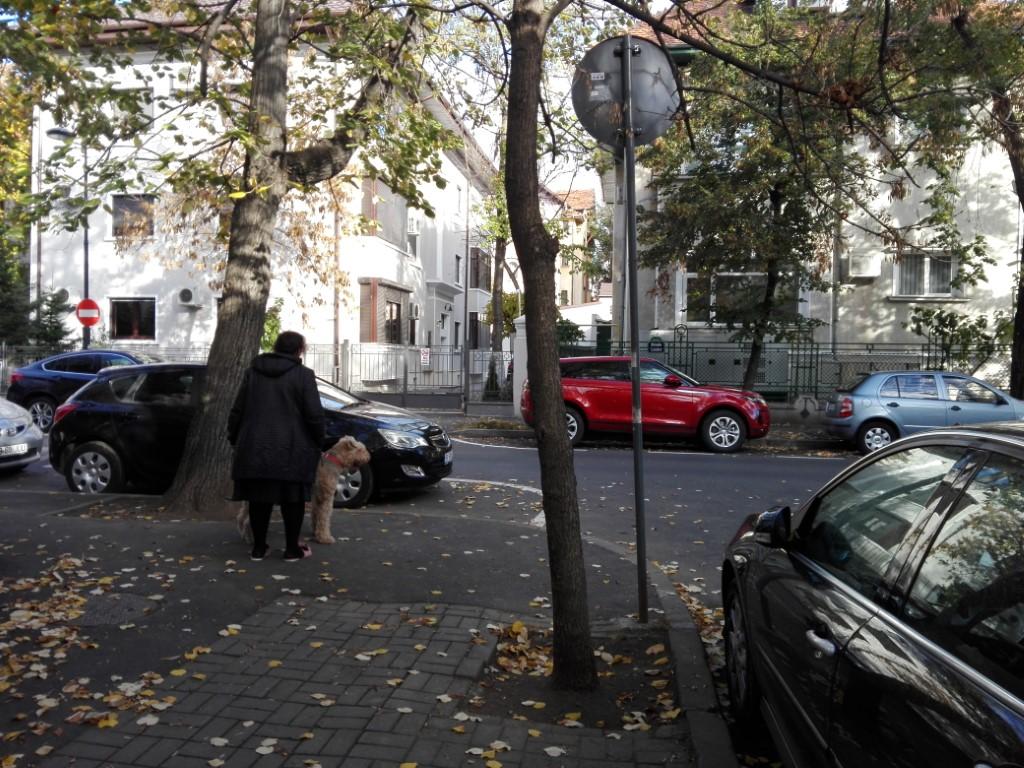 stradă încoronare pierdere în greutate stradă)