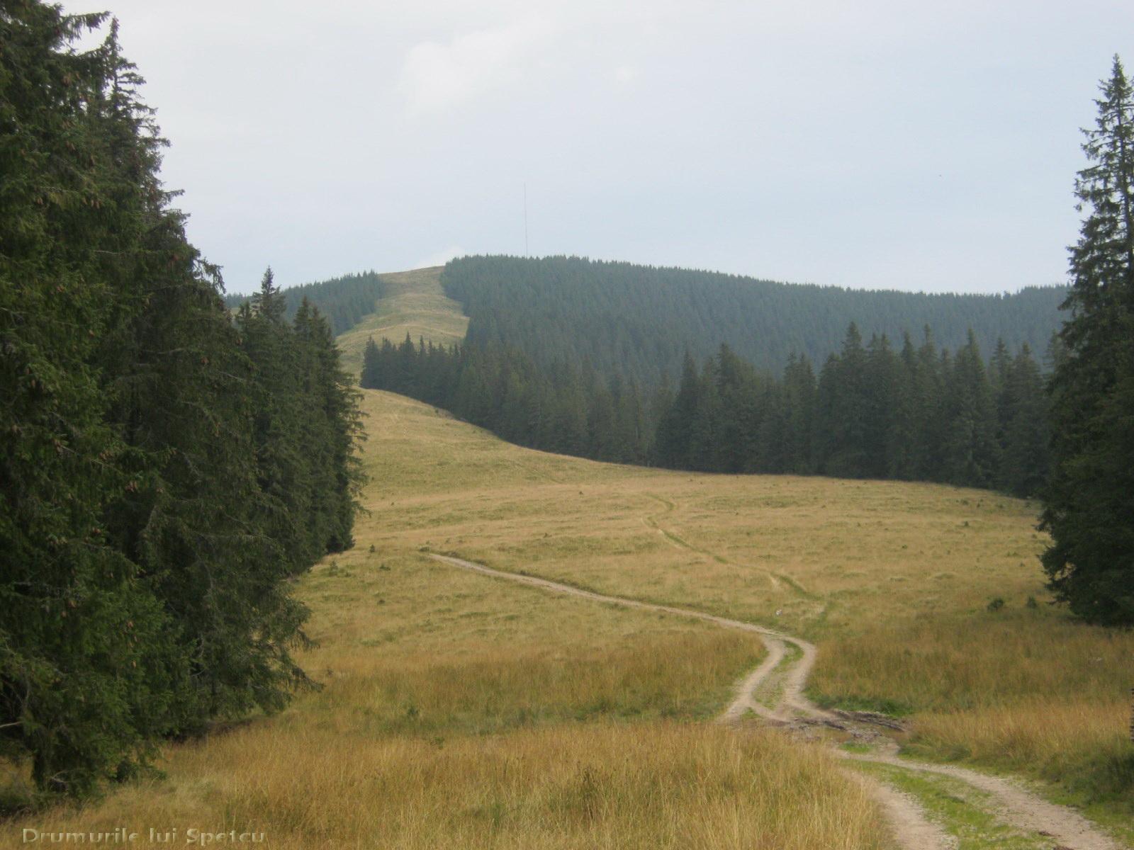 Descrierea sabiei de munte. Uralele subpolare