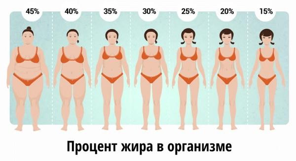 estimator al pierderilor de grăsime corporală